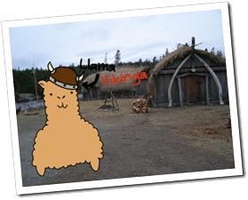 llama_vikinga