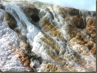 Mammoth Hot Springs Terraces (16)