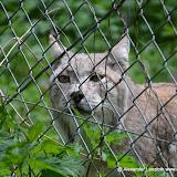 Wildpark-PF_2012-04-29_1014.JPG