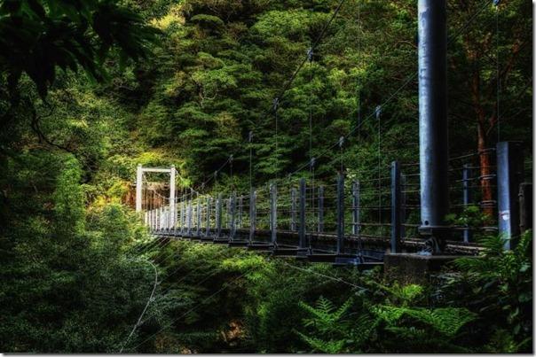 floresta no japão (1)