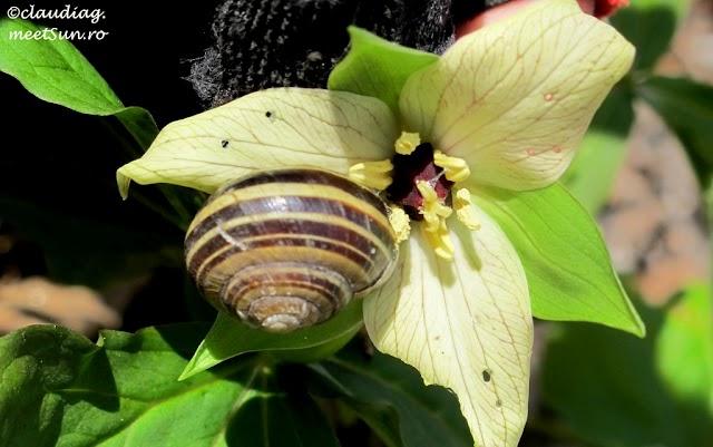 flori-primavara-canada-07.jpg