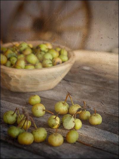 Autumn wild pears  Photographer Lois Slokoski