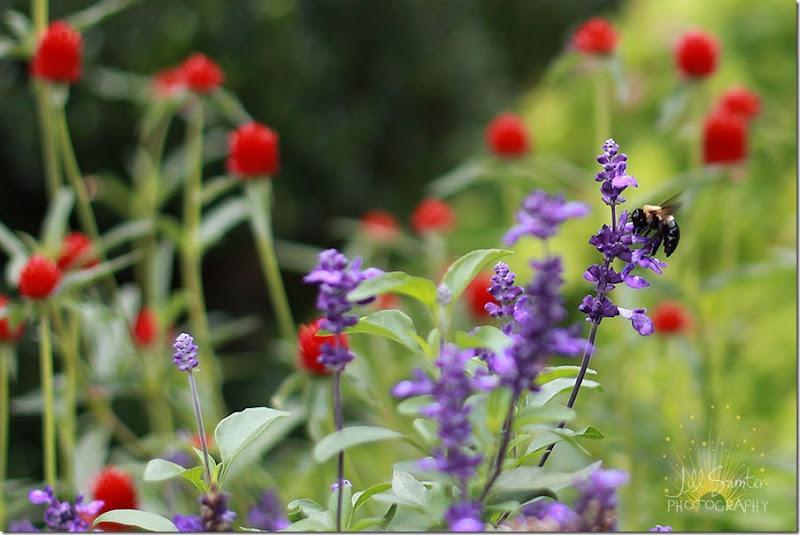 flower-red_9660