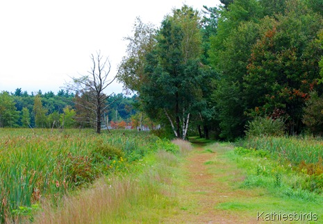 1. Geremonty marsh-kab