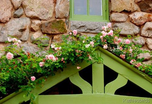 1. roses-kab