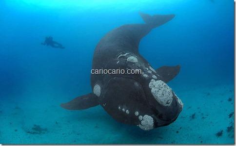 imagens Submarinas (7)