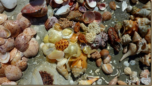 Sanibel Shell and birds_193