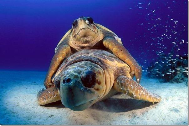 Fotos subaquáticas de David Doubilet (34)