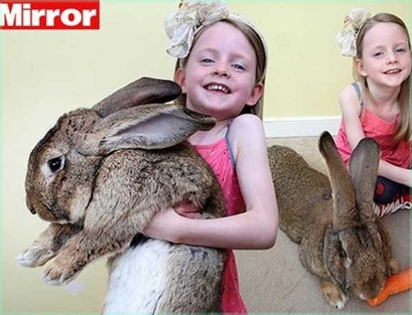 1- O maior coelho do mundo
