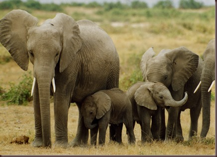 Amazing Animals Pictures Elephant (8)