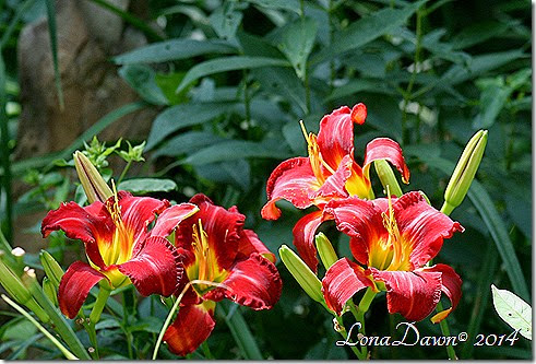 Lily Fest Reds