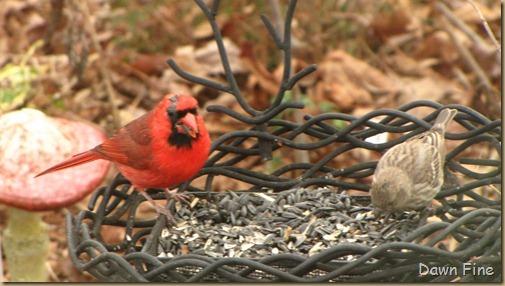 Feeder birds_019