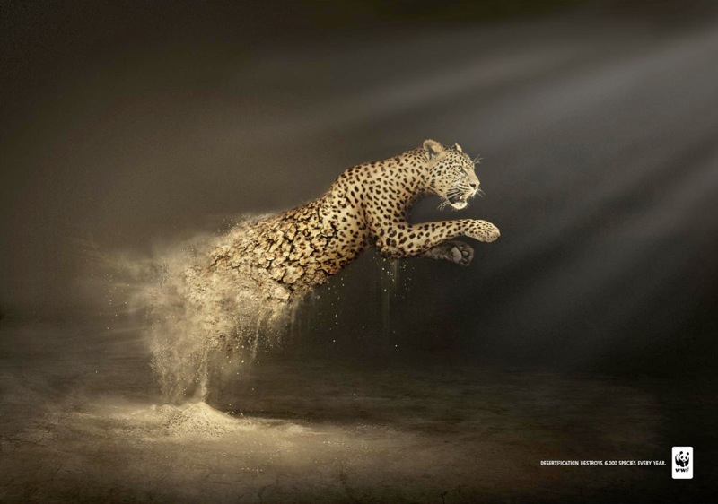 Wwf leopard 0