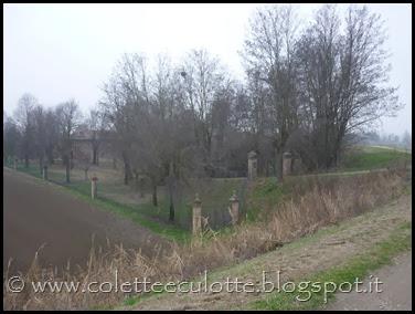 Passeggiata sull'argine dopo la piena - Padulle - 11 gennaio 2014 (16)