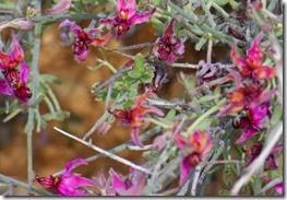 Cave Creek Regional Park Spring Blooms