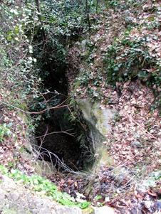 A woodsy walk 18