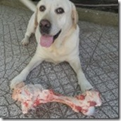 Há mas não é para comer já - sofre cão.Jun.2013