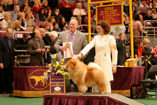 My dad, the great Maddox, won BEST OF BREED!  A true champion - I hope to follow in his footsteps.  What a proud moment for the family!  Especially since his dad, Paw Paw was also a champion!  (photo credit Marina Smirnova)