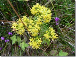 like st johnswort