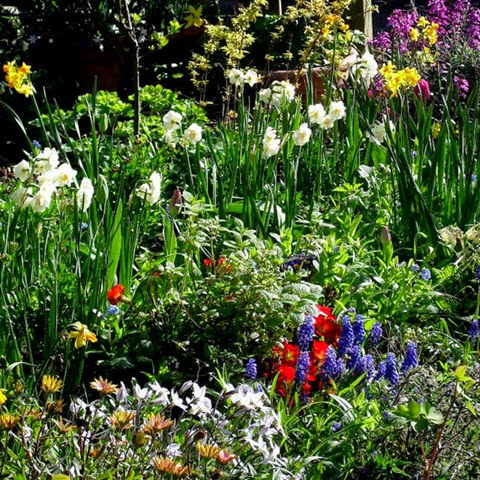 why we garden Spring is getting closer, and that means garden season with this first garden podcast of the year ryan and hillary discuss some opening comments on getting ready.