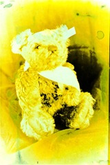 Split-Toned-Prints---Bears-1-E