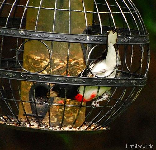 19. feeding-kab