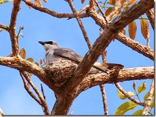 Hull Heads Bird