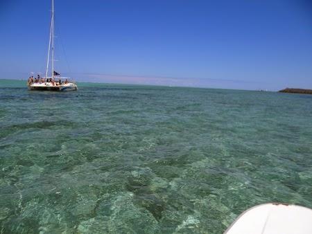 Marea verde din Mauritius