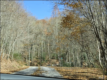 bare trees on road to Brasstown Bald