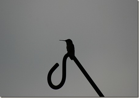 Hummingbird silhouette, Ruby-throated hummingbird