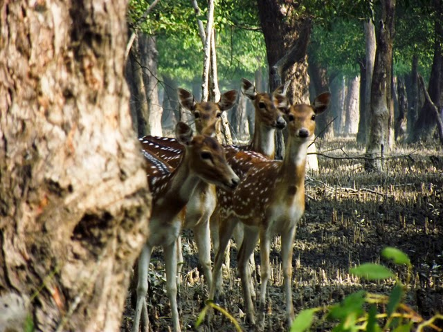 Spotted Deer inside Kotka Wildlife Sanctuary