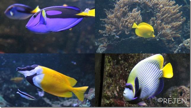 Danmarks Akvarium Juli 20122