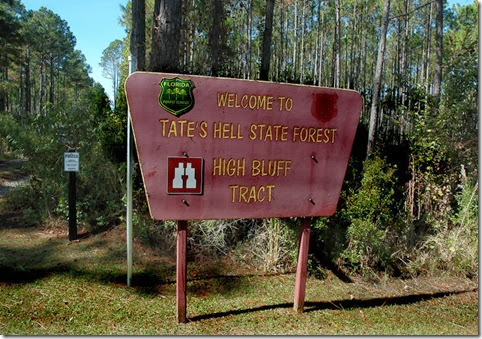 Tates Hell Forest 026