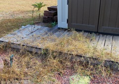 Grass Grows Over Our Decks