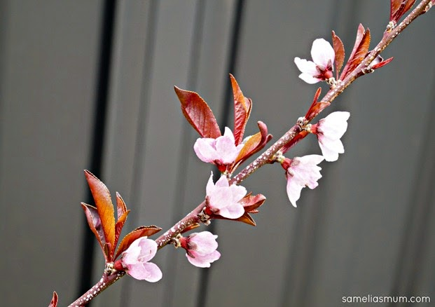 Nectarum