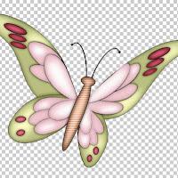 butterfly2c.jpg
