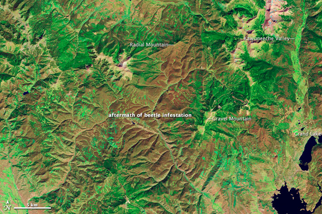 The Thematic Mapper on Landsat 5 acquired this image of lodgepole pine forests near Grand Lake, Colorado on 28 September 2011, after a severe bark beetle infestation led to die-off of the tree canopy. NASA Earth Observatory image created by Robert Simmon, using Landsat data provided by USGA