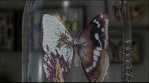 01 le papillon