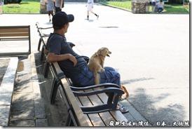 日本大阪城,最後主人同意讓這隻狗狗跳到他的大腿上,看牠一副舒服樣。