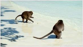 Обезьяний пляж на острове. Таиланд. Фото С. Родионова. www.timeteka.ru