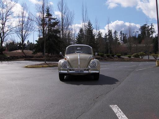 Pictures - volkswagen bug