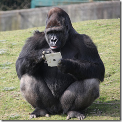 Gorilla using an iPad - The Mobile Spoon