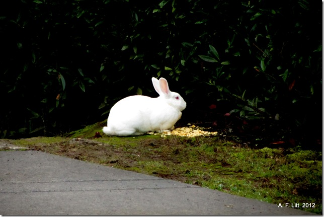 Abandoned Rabbit.  Gresham, Oregon.  December 20, 2011.  Photo of the Day, Easter, April 8, 2012.