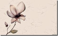 flores-flowers-flor-fleurs-489
