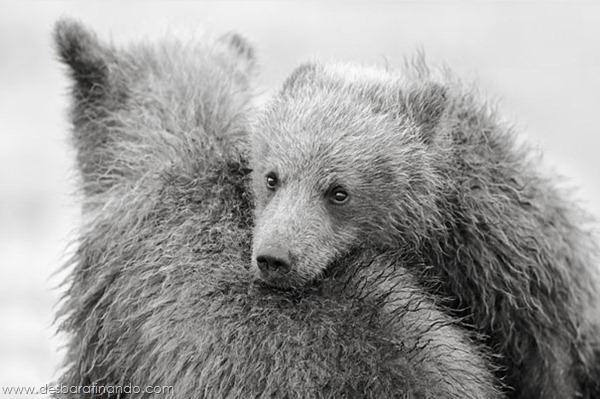 uros-engracados-fofos-fotos-desbaratinando-nikolai-zinoviev (14)