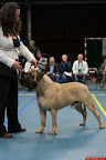 20130510-Bullmastiff-Worldcup-0251.jpg