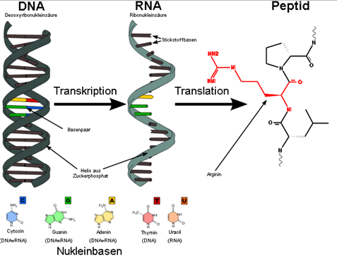 Pengertian DNA