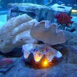pearls at the Shinagawa Aquarium in Shinagawa, Tokyo, Japan
