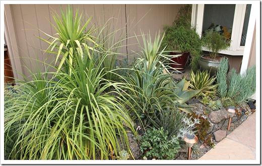 110805_front_succulents