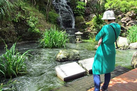 Obiective turistice Wellington: - in gradina botanica